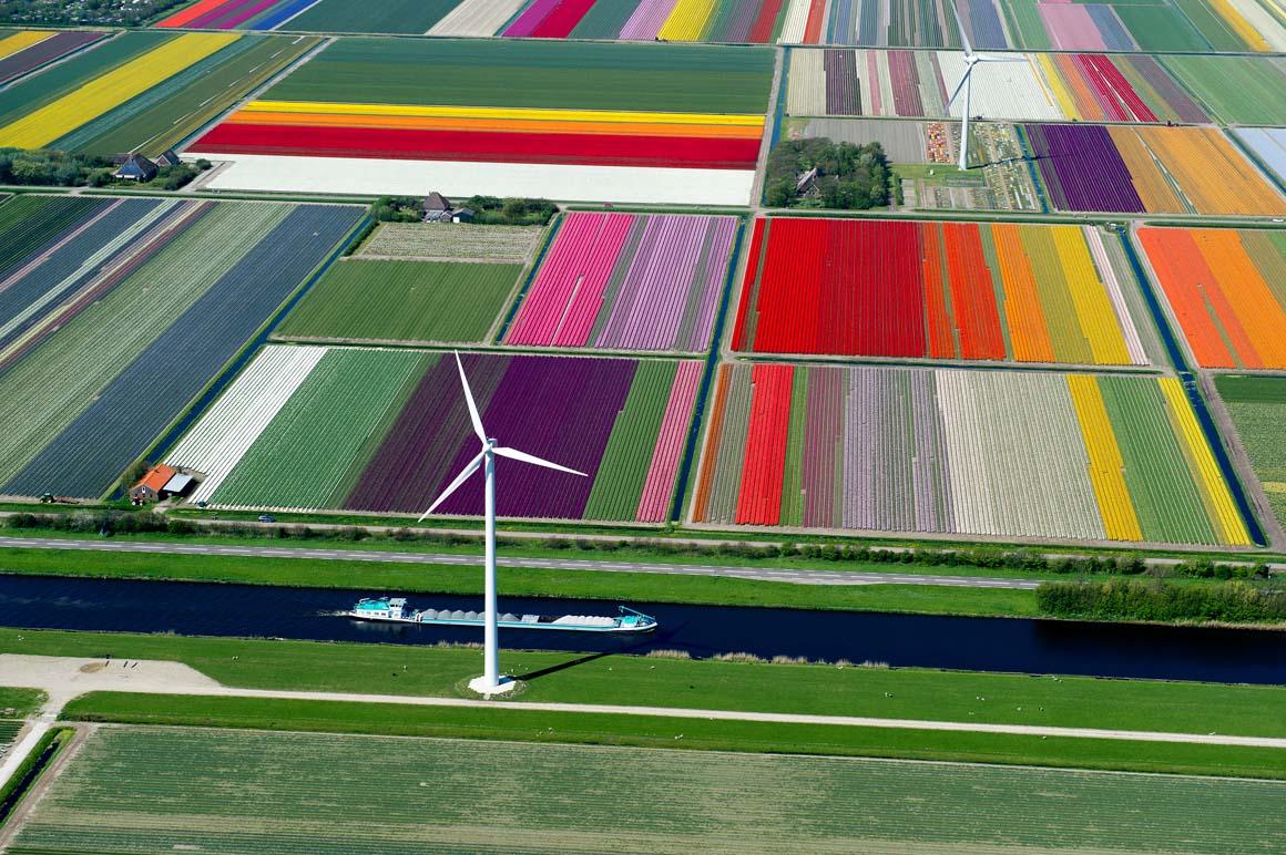 Campos de tulipas do Norte da Holanda. Fotos gentilmente cedidas pelo autor
