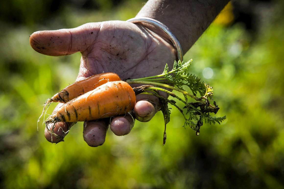 Agricultura. Bruxelas quer pequenos agricultores a produzirem de forma biológica